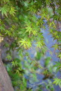 春紅葉 - tokoのblog