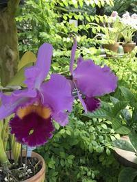 新宿御苑大温室の花たち - まましまのひとり言