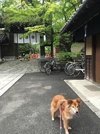 こむぎの連休 - Kyoto Corgi Cafe
