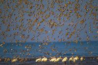 九州旅行よか干潟1日目その他の鳥たち - 夫婦でバードウォッチング