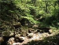 森林セラピーロード(安芸太田町) ~龍頭峡 - Que Sera *Sera
