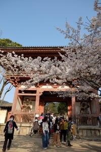 太閤さんの桜、醍醐寺は華やかに - カマクラ ときどき イタリア