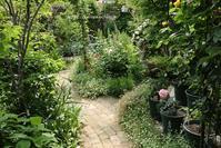 可愛い薔薇たちとビシバシのカクテル - miyorinの秘密のお庭