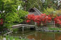 初夏の花巡り・霧島躑躅@梅宮大社 - デジタルな鍛冶屋の写真歩記