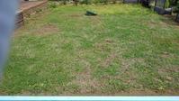 クラピアの草取り、その5 - うちの庭の備忘録 green's garden