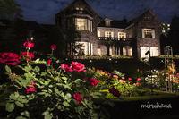 旧古河庭園*バラと洋館・日本庭園のライトアップ - MIRU'S PHOTO