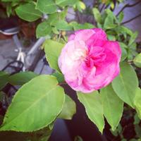 *明日5/11は〜 - salon de thé okashinaohana 可笑的花