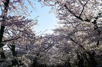 2019東北・北陸紀行~弘前公園③ - Photo Of 北海道大陸