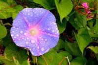 19.5.10風邪も雨も、ブッ飛ばしましょう - 沖縄本島 島んちゅガイドの『ダイビング日誌』