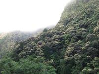 クマタカちゃん親子との再会~【奈良県】5/4 - 静かなお山の森歩き~♪