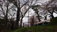 会津のサクラ亀ヶ城跡2@福島県猪苗代町 - 963-7837