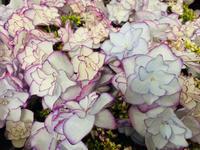 母の日ギフト、揃ってます(^-^) - ブレスガーデン Breath Garden 大阪・泉南のお花屋さんです。バルーンもはじめました。