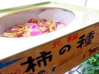 バラの季節に心を寄せて - Miwaの優しく楽しく☆