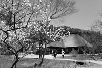 1539 遠野ふるさと村 - 四季彩空間遠野