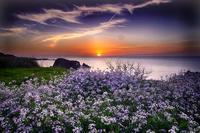 丹後半島の春 - まっちゃんのPHOTOブログ