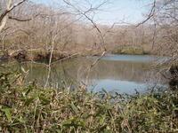 春の錦小沼を歩く - あいのひとりごと