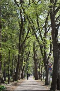 北海道大学のキャンパス散歩。清々しい爽やかな日です。 - ワイン好きの料理おたく 雑記帳