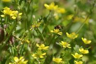 花 と 虫(7) - 野山の住認たち Ⅲ