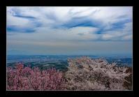 天空の花桃 - Desire