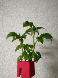 野菜の成長って早いんですね - Lock-design.