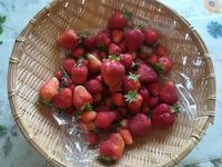 苺が最盛期 - miitaの日記