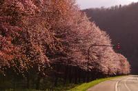 *まだまだ桜、楽しんでいます* - bee !bee!!bee!!!