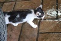 クアラトレガンヌの子猫 - 旅めぐり&花めぐり