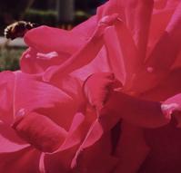 蜂と薔薇 - 赤煉瓦洋館の雅茶子