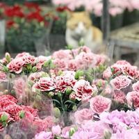 いよいよ母の日! - さにべるスタッフblog     -Sunny Day's Garden-