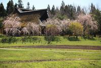 1540 遠野ふるさと村の桜 - 四季彩空間遠野