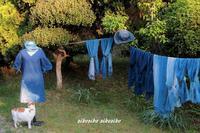 草木染久々の藍染 - 今が一番