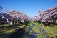 川沿いの桜並木 - ペンタで行こう。