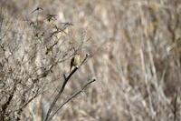 2月に出会った鳥さんたち@舞岡公園 - Buono Buono!
