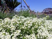 「ハーブ展」開催中! - 手柄山温室植物園ブログ 『山の上から花だより』