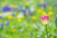 5月11日今日の写真 - ainosatoブログ02