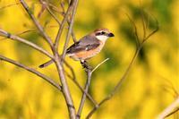 いきなり目の前に - 綺麗な野鳥たち