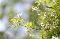 五月の風 - ecocoro日和