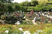 令和に相応しい皇室ゆかりのバラが輝く、旧古河庭園 - 旅プラスの日記