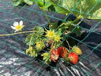 植え付けラッシュです - Salad Days