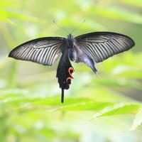 庭の中 - TACOSの野鳥日記