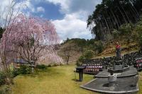 桜巡り2019@京北宝泉寺 - デジタルな鍛冶屋の写真歩記