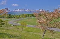 深山牧場から桜越しに栗駒山を - 栗駒山の里だより