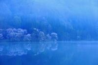 予告桜・響く 2019~中綱湖オオヤマザクラ~ - hello,everblue