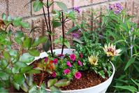 夏の寄せ植えその1作りました - 56歳☆専業主婦やってます
