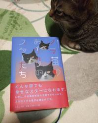 「ノラ猫あがりのスターたち」 - 青梅ニャンだふる☆Life