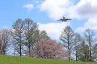 最後の桜~旭川空港~ - 自由な空と雲と気まぐれと ~from 旭川空港~