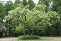新緑に魅せられて - 一場の写真 / 足立区リフォーム館・頑張る会社ブログ