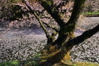 2019 東北撮影遠征-青森・弘前城- - さんたの富士山と癒しの射心館