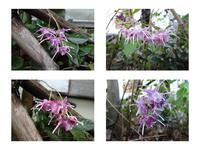 群馬倉渕の春を彩る草花 - 折々の記