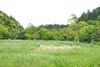 はらぺこあおむし - 千葉県いすみ環境と文化のさとセンター